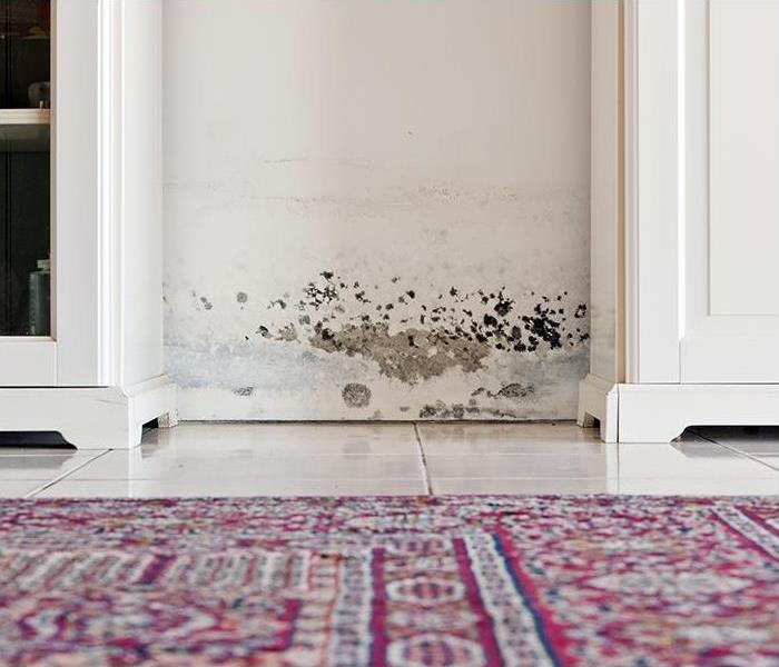 Mold Remediation Mold Damage Remediation Services Used To Protect Your Glendale Area Home