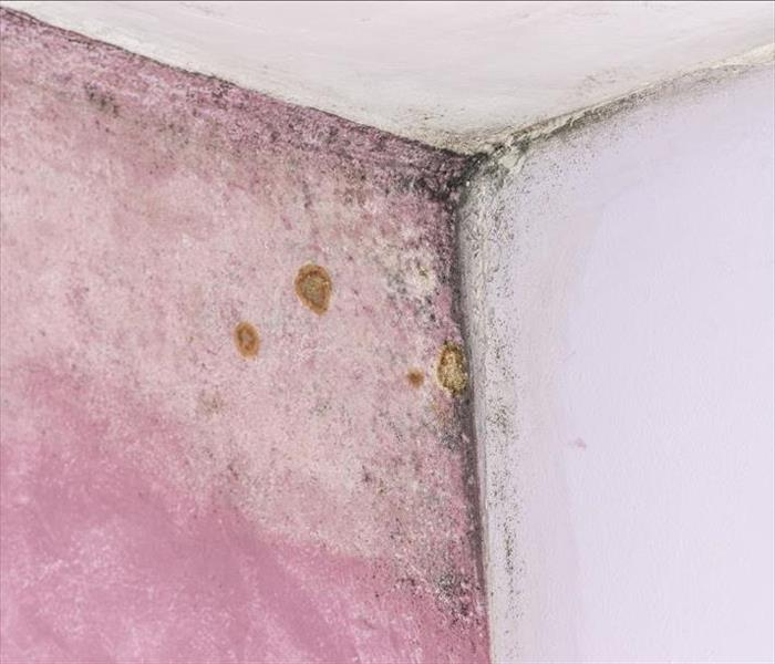 Mold Remediation Out-of-Control Mold Damage Can Ruin Clothing and Household Items in Glendale