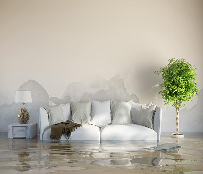 Water Damage What Can Highland Park Water Damage Services Do For You?
