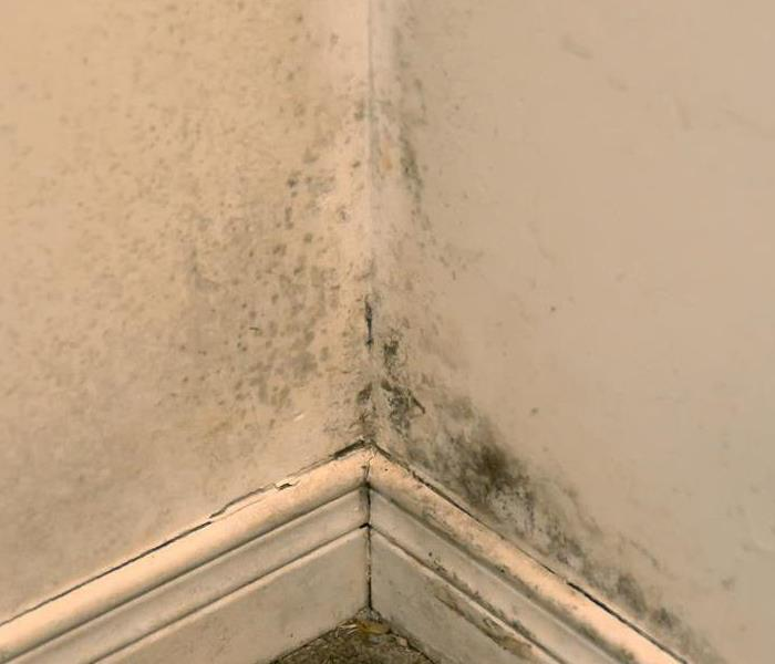Mold Remediation Sparring with Spores: How Remediation Companies Remove Mold From Your Los Angeles Home