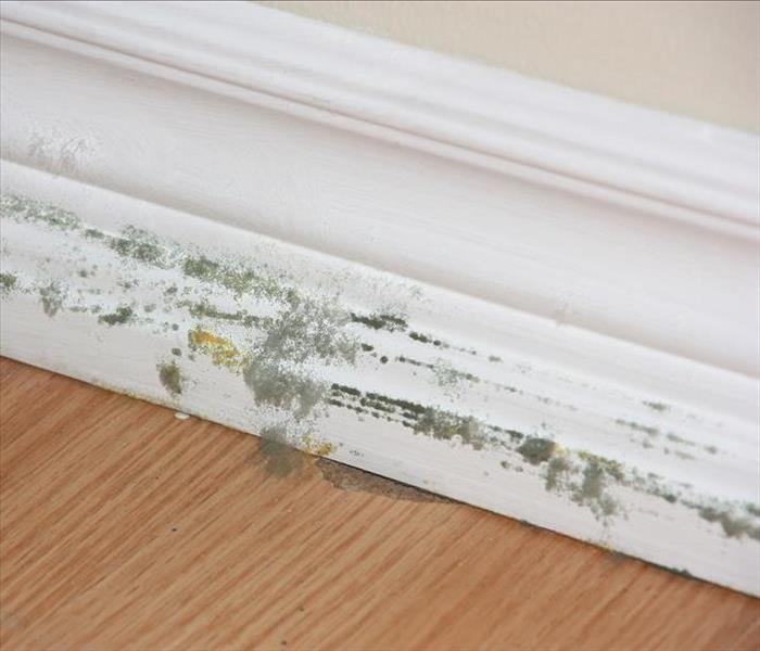 Mold Remediation Mold Damage and Minimizing Costly Damages