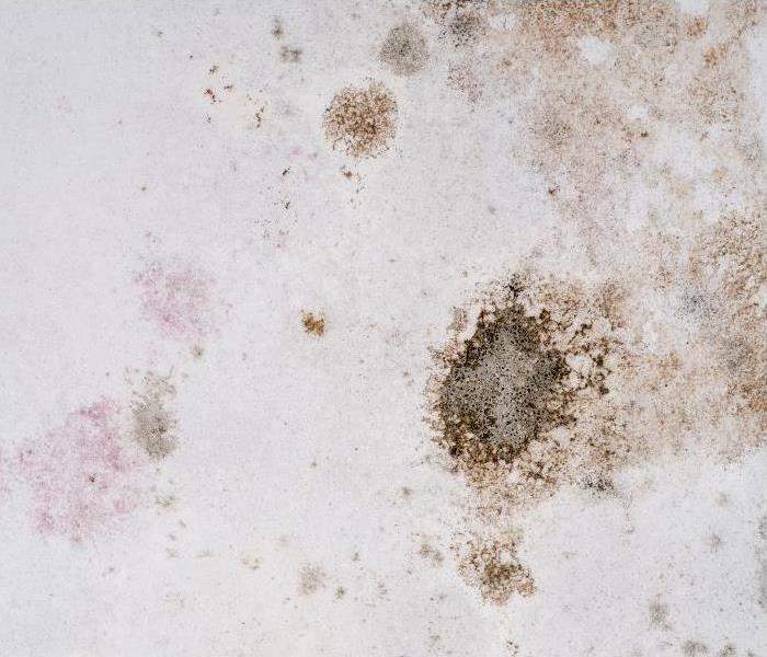 Mold Remediation How Our Specialists Use Dry Ice In Our Mold Remediation Process In Glendale