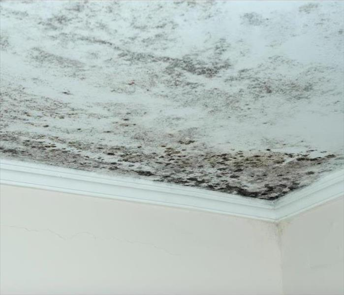 Why SERVPRO Some of the Biggest Problems With Mold in Glendale Result From Delayed Action