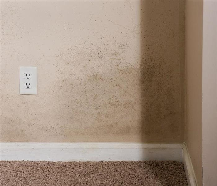 Mold Remediation Cleaning Mold Damage from Highland Park Homes