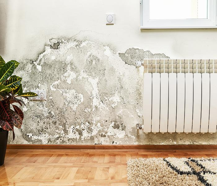 Mold Remediation Eagle Rock Water Damage And Mold: Making The Connection