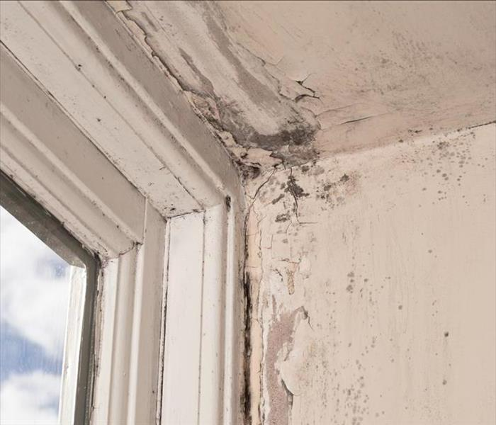 Mold Remediation Mold Growth is Difficult to Eradicate for Do-It-Yourselfers