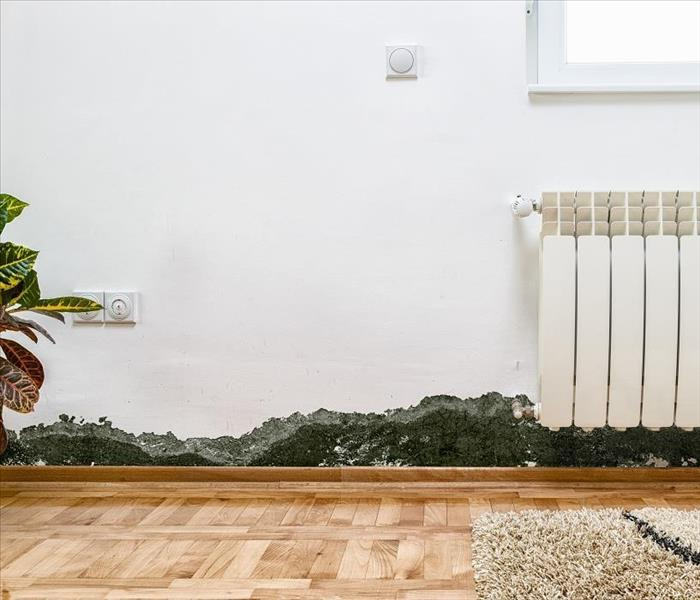 Mold Remediation Get Your Basics Right When You Face Mold Damage in Glendale