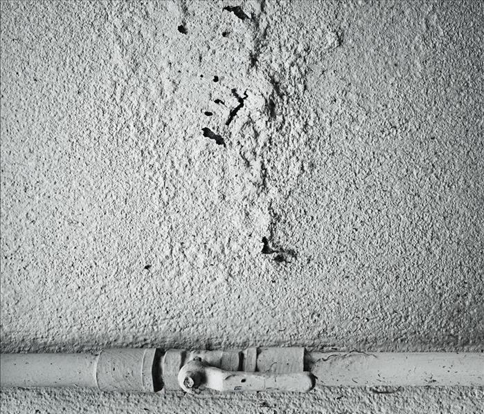 Mold Remediation What does Mold Consume in Eagle Rock?