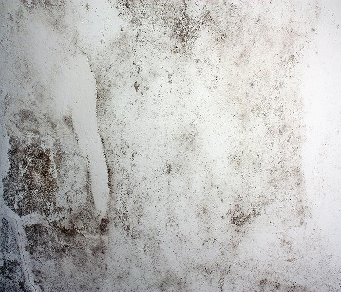 Mold Remediation How Glendale Mold Affects Homeowners