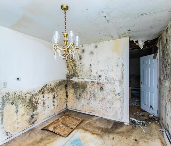 Mold Remediation When Flood Damage Leads To Mold Growth In Your Highland Park Home
